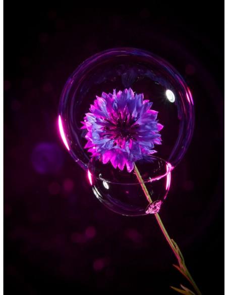 Bleuet protégé par une bulle. Photo Art galerie Fot'Océane - Photo collection Flum