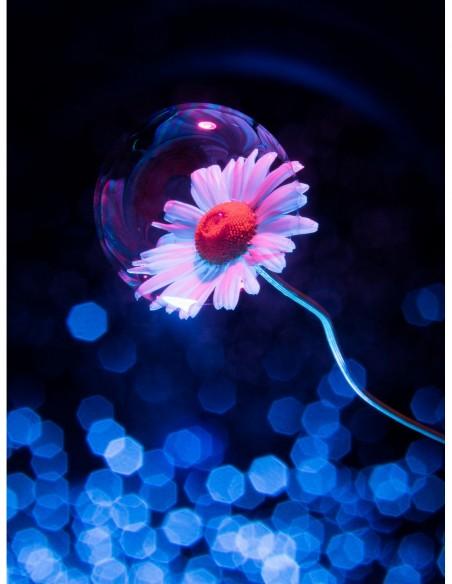 Marguerite surmontée d'une bulle. Photo Art galerie Fot'Océane - Photo collection Flum