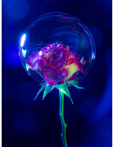 Rose perdue dans une bulle. Photo Art galerie Fot'Océane - Photo collection Flum