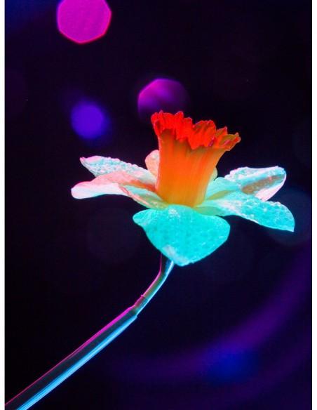 Narciso y sus bonitos reflejos. Photo Art galerie Fot'Océane - Colección de fotografías Flum